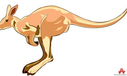 HOP ALONG, MR. SOCCEROO: A pitch invasion in the land down under by a kangaroo